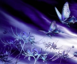 butterflies and night image