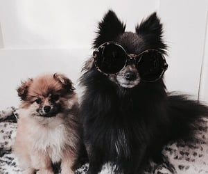 dog, sunglass, and fashion image