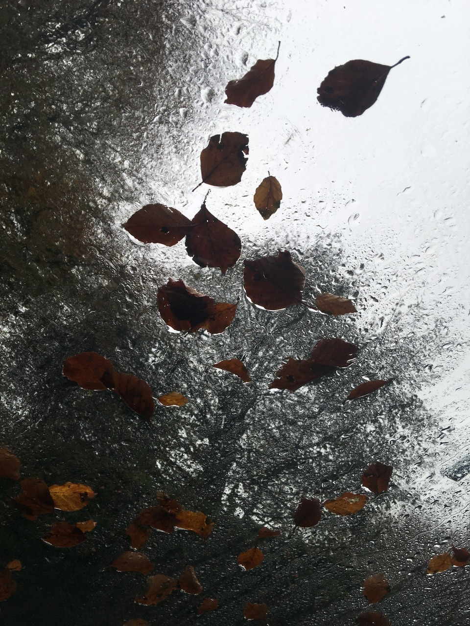 autumn, car, and glass image