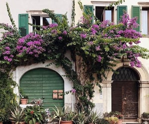 blossom, exterior, and flowers image