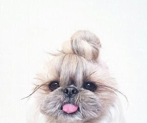 adorable, pet, and photography image