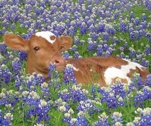 brown, cow, and flowers image