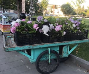 cat, flowers, and nostalgic image