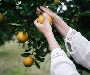 lemon trees lovely image