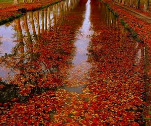 autumn, leaves, and tree image