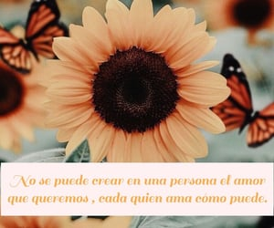 amor, frases, and spanish image