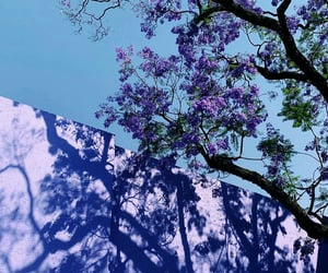 blue, colors, and lilac image