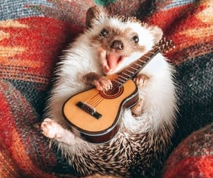 animal, guitare, and hedgehog image