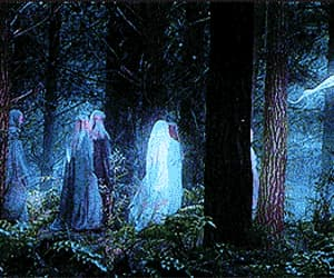 enchanted forest and gif image