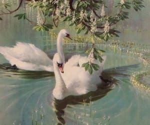 aesthetic, summer, and Swan image