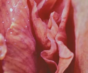 flower, photography, and suggestive image