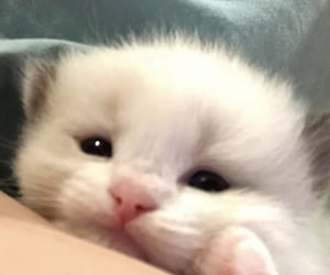 kitten, kitty, and sanrio image