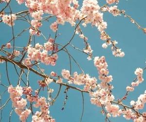 sakura, blue, and fresh image