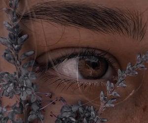 brown, plant, and eye image