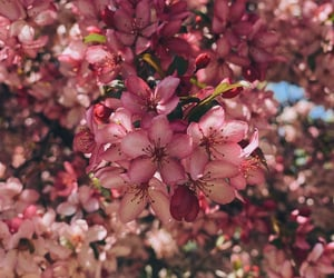 flower tree, flowers, and phone background image