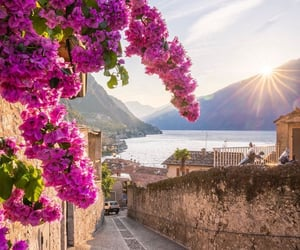 beautiful places, flowers, and great view image