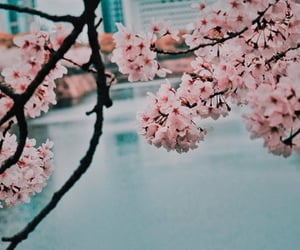 alive, cherry blossom, and cherry image