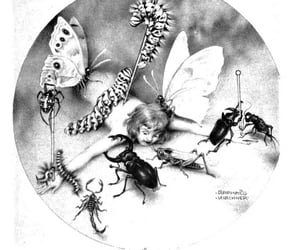 archive, insects, and krp image