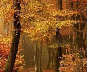 autumn, otoño, and exteriores image