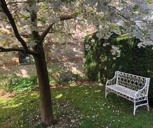 backyard, beauty, and bench image
