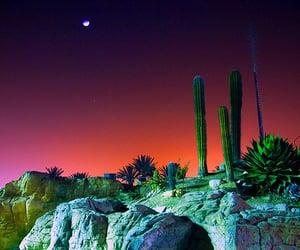 cactus, dark sky, and moon image