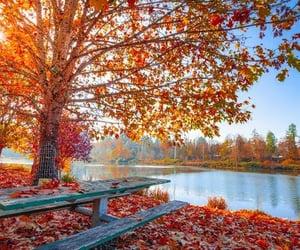 autumn, lake, and leaves image