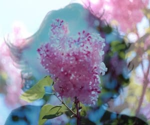beautiful, double exposure, and flowers image
