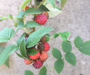 backyard, berries, and delicious image