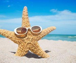 beach, summer, and starfish image