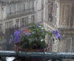 flowers, rainy day, and rain image