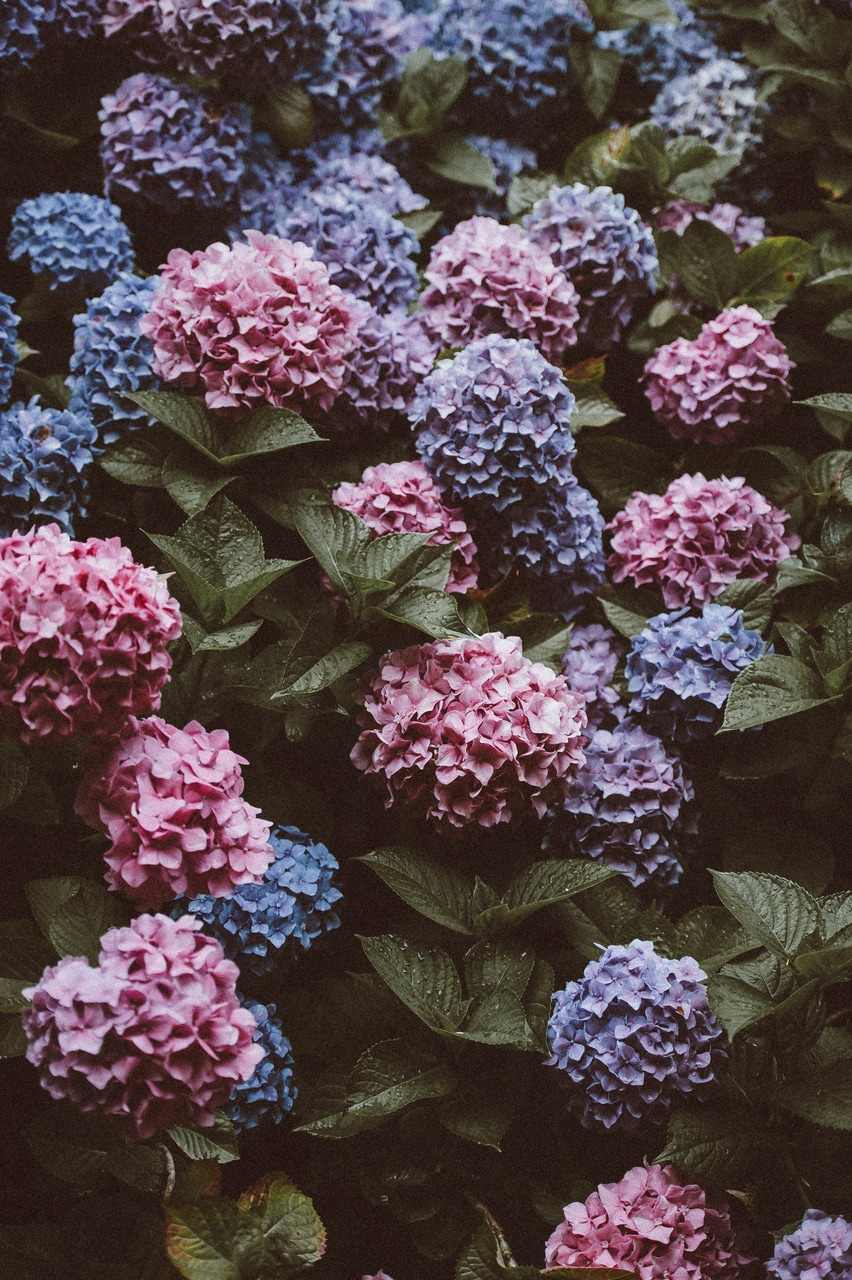 beautiful, bush, and flower image