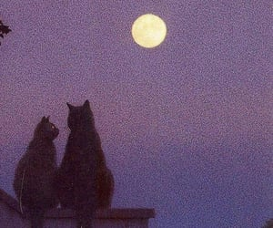 beautiful, cats, and night image