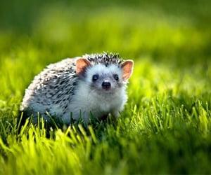 Little hedgehog By Polyushko Sergey Photography