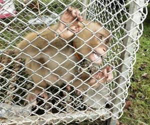 abuse, animal, and animal cruelty image