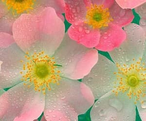 Most Beautiful Pink and White Flowers Wallpaper