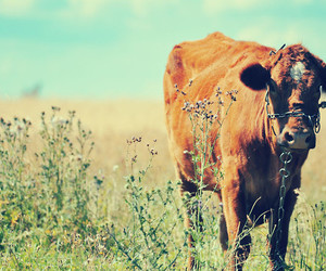 cow, grass, and sky image