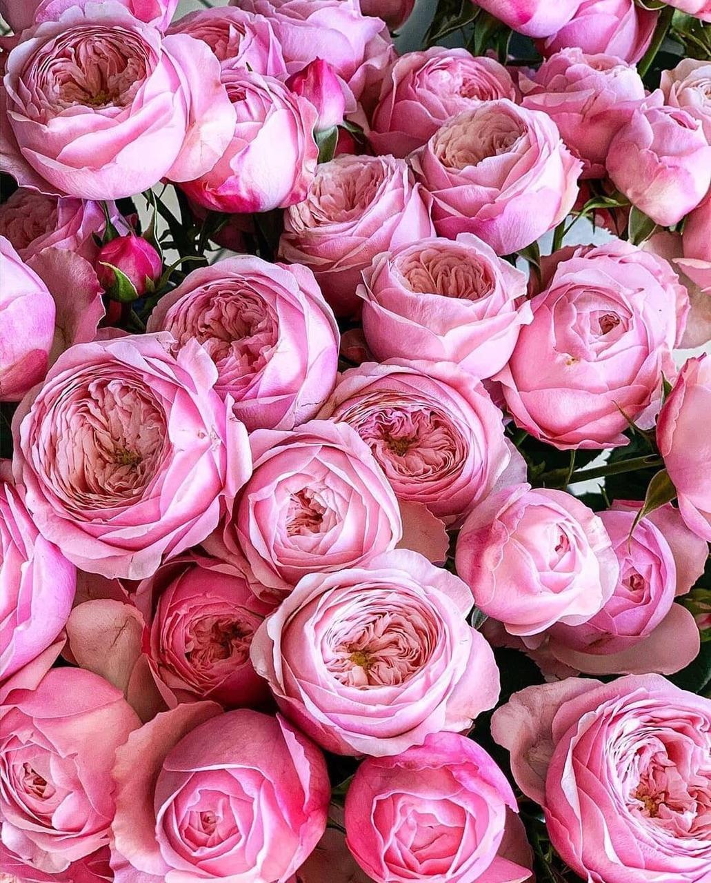 aesthetic, amazing, and flower image