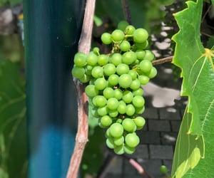 food, grapes, and green image