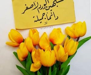 الورد الأصفر image