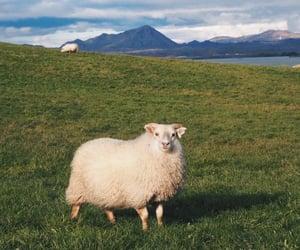 animal, nature, and sheep image