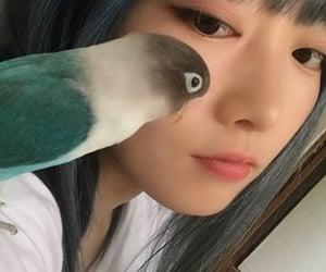 bird, bluehair, and japan image
