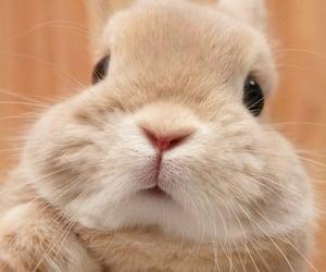 bunny, animal, and adorable image