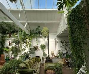 house plants, decoration plants, and نبات image