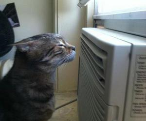 cat and heat image