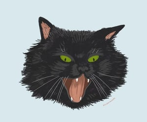 black, cat, and cry image
