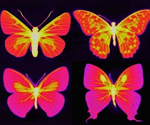 aesthetic, butterflies, and posters image