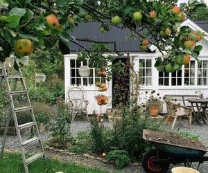 aesthetic, fruit, and garden image