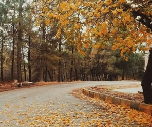 aesthetic, autumn, and Effects image