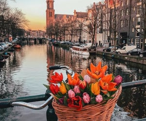 flowers, city, and amsterdam image