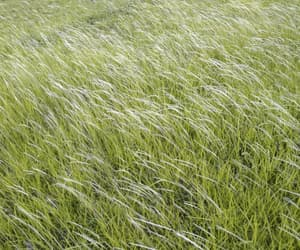 field, green, and soft image